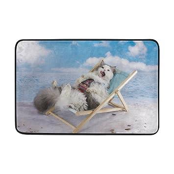 ALAZA verano playa gato gatito azul cielo Felpudo Alfombrilla de interior al aire libre Entrada Suelo baño 23,6 x 15,7 pulgadas: Amazon.es: Hogar