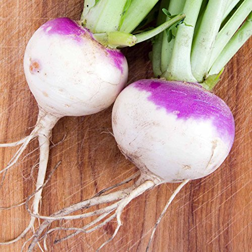 Heirloom Rutabaga Seeds - American Purple Top Variety - 25 Lb Bulk Seed - Non-GMO Garden Seed - Vegetable Gardening by Mountain Valley Seed Company