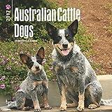 2017 Australian Cattle Dogs Mini 7x7 Wall Calendar {jg} Great Holiday Gift Ideas - Great for mom, dad, sister, brother, grandparents, gay, lgbtq, grandchildren, grandma.