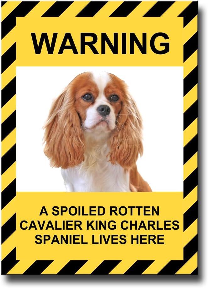 Cavalier King Charles Spaniel Spoiled Rotten Fridge Magnet No 2 Funny