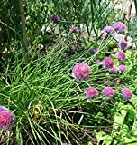1/4 oz Chives Seeds, Heirloom Herb Seeds, Perennial Herbs