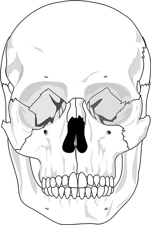 Amazon Com Ts Delight Laminated 24x36 Inches Poster Skull Human