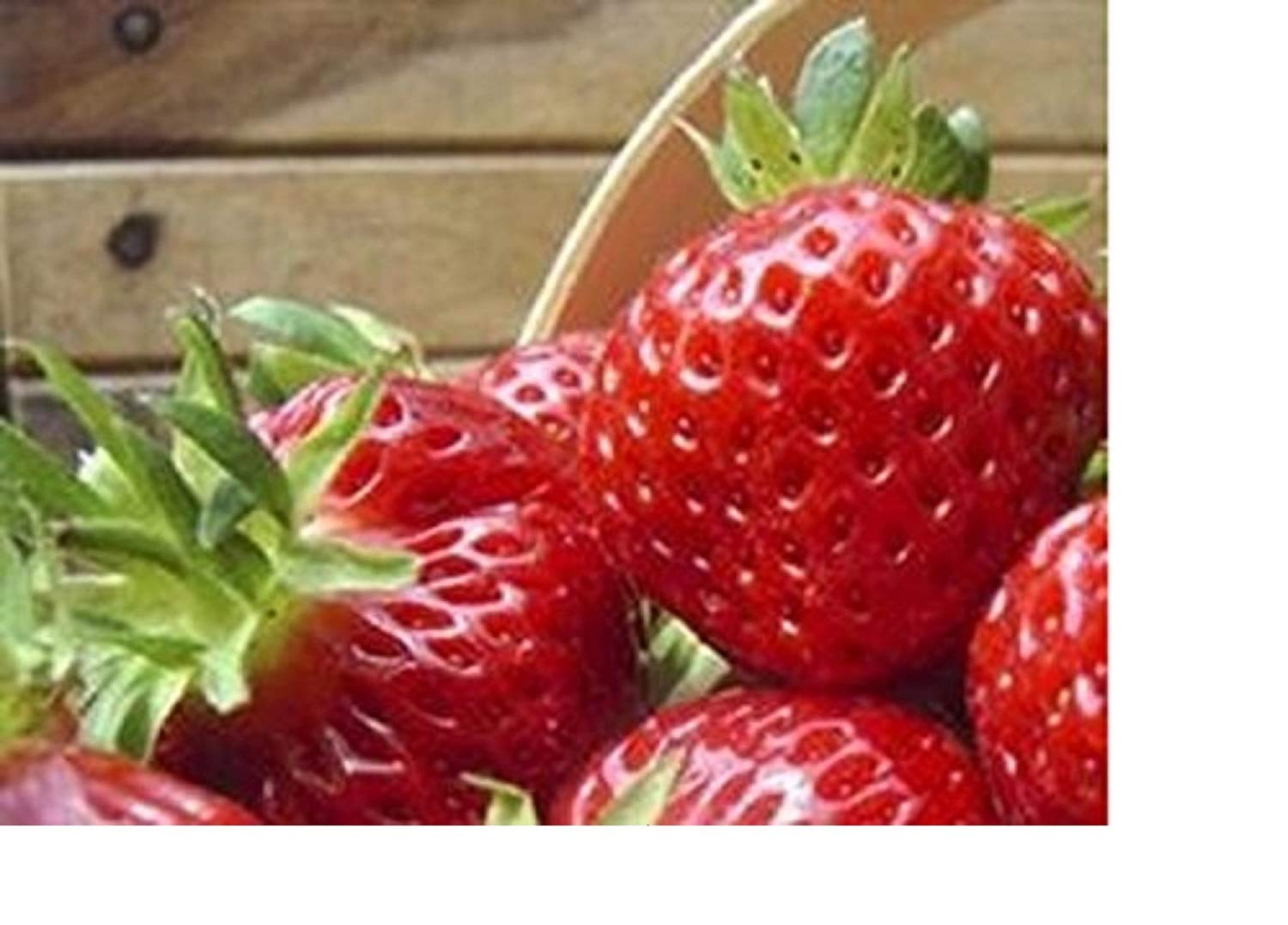 20 x Strawberry Honeoye Mid Fruit Plants - Grow You're Own Strawberries - BARE ROOT Fruit Bush Strawberry