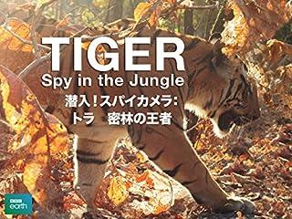 潜入!スパイカメラ:トラ 密林の王者
