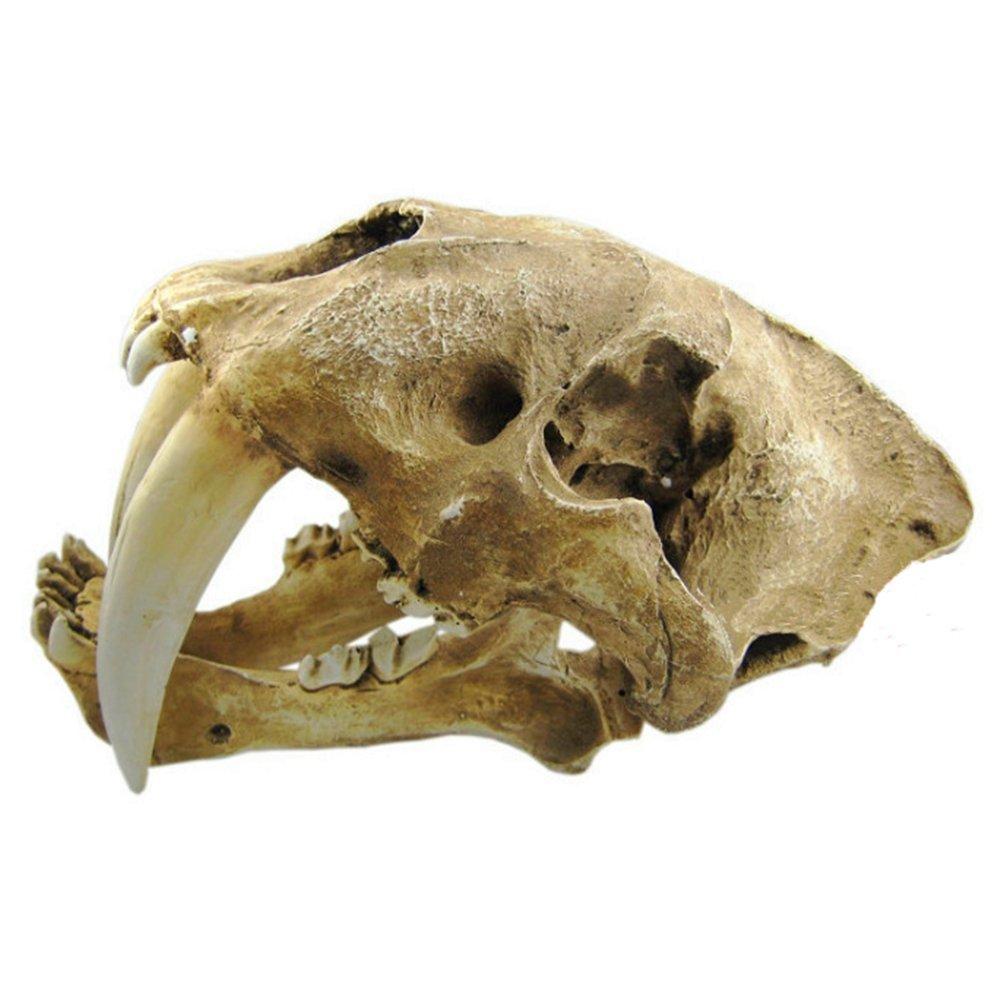 Gmasking Resin Smilodon Sabertooth Tiger 1:1 Skull Replica by Gmasking (Image #4)