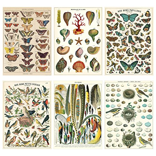 French Nature Vintage Style Poster Set of 6 Decorative Paper