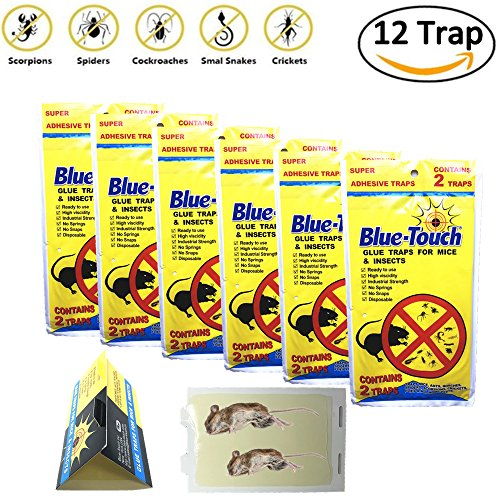 12 Traps (6 Pack) Blue Touch Sticky Mouse Traps, Mouse Glue Board Professional Sticky Mouse& Insect trap, Better Than JT Eaton, Victor Glue Board & Masterline,NON-TOXIC,Peanut Butter Scented - Mouse Insect Glue