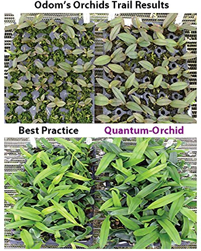 Quantum Growth Orchid - 8 Ounce
