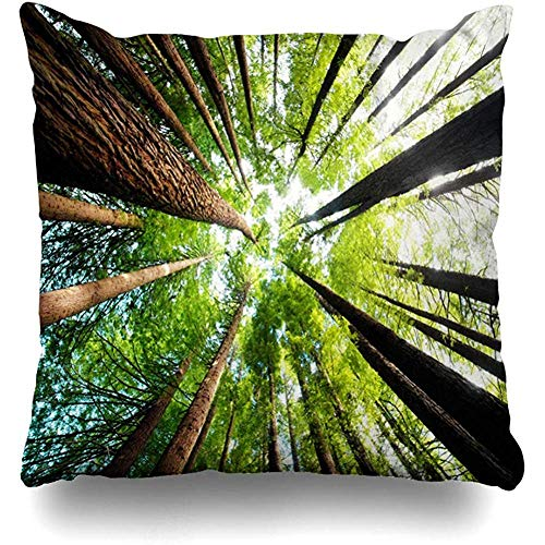 (Throw Pillow Case Trunks Green Australia Ancient California Redwood Trees Beech Victoria Forest Wildlife Nature Grow Home Decor Zippered Cushion Cover Square Size 18
