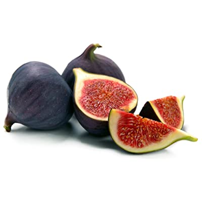 "Fig Trees ""Black Mission"" Includes Four (4) Live Plants : Garden & Outdoor"