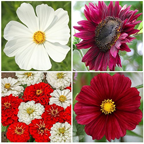 Used, OH CANADA Garden - SEED KIT *Save 25%* Red & White for sale  Delivered anywhere in Canada