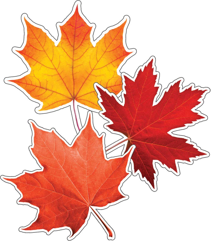 - Carson Dellosa – Fall Leaves Colorful Cut-Outs, Classroom Décor