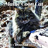 2019 Maine Coon Cat Wall Calendar