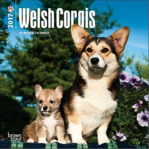 Welsh Corgis Mini Calendar 2017 - Deluxe Small Wall Calendar (7x7)