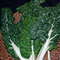 Swiss Chard Garden Seeds - Fordhook Giant - Non-GMO, Heirloom Vegetable Gardening & Microgreens Seeds