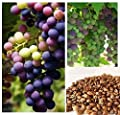Homegrown Grape Seeds, 20 Seeds, Delicious Bicolor Grape Variety
