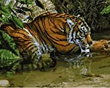 YEESAM ART Paint by Number Kits for Adults Kids - Tiger Soak in the water 16x20 inch Linen Canvas without Wooden Frame