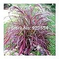 20pcs/lot Half-hardy Perennial Pennisetum setaceum 'Fireworks' Fountain Grass Seeds bonsai plant home garden free shipping