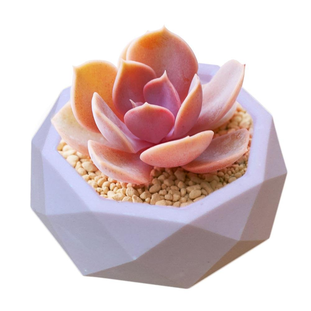 Waroomss Fleur Plantes Pot Silicone Moule Glace//Savon Couleur Al/éatoire Creative G/éom/étrique Polygonal Bricolage Argile Craft Silicone Moule pour Bonbons /à la Main//Chocolat