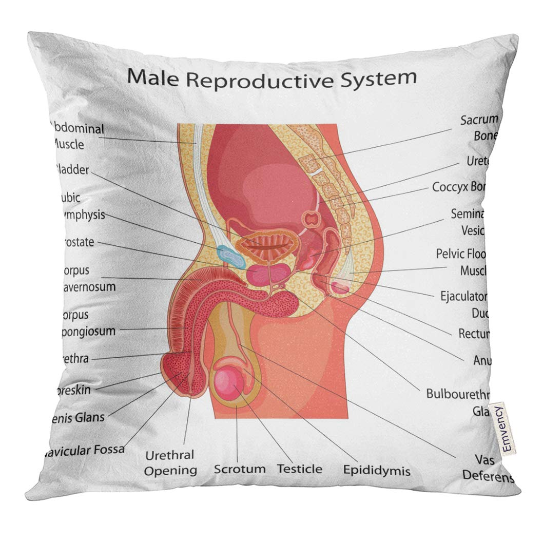 Amazon Vanmi Throw Pillow Cover Body Education Chart Of Biology