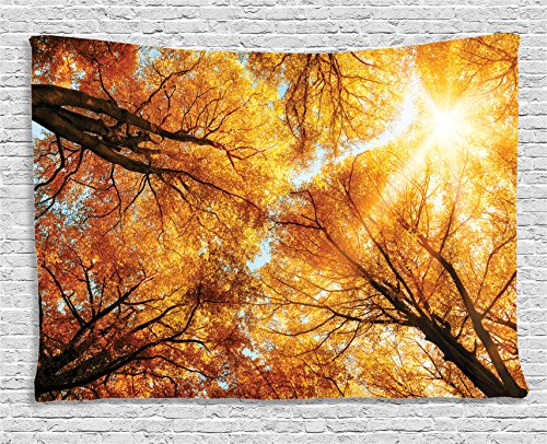 - Ambesonne Forest Tapestry, Fall Autumn Season Sun Beaming Through The Trees Freshening Picture, Wide Wall Hanging for Bedroom Living Room Dorm, 60