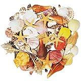100PCS Sea Shells Mixed Ocean Beach Seashells-Natural Colorful Seashells Starfish Perfect for Vase Fillers,Wedding Decor Beach Theme Party, Home Decorations,DIY Crafts, Fish Tank,Candle Making