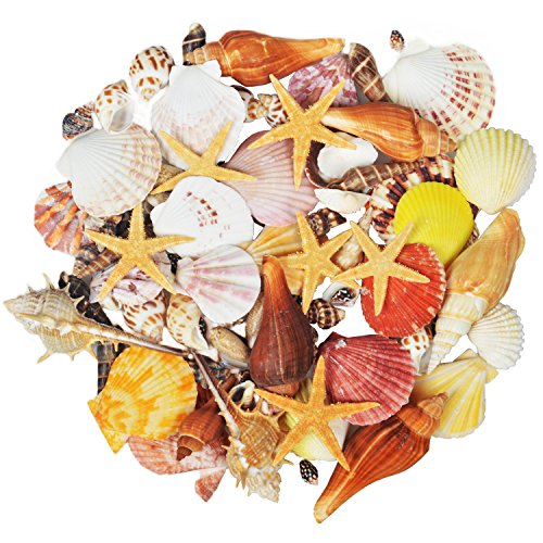 100PCS Sea Shells Mixed Ocean Beach Seashells-Natural Colorful Seashells Starfish Perfect for Vase Fillers,Wedding Decor Beach Theme Party, Home Decorations,DIY Crafts, Fish Tank,Candle Making