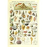 Vintage Poster Print Art Seashell Marine Life Sea Creature Identification Reference Chart Wall Decor15.75'' x 23.62''