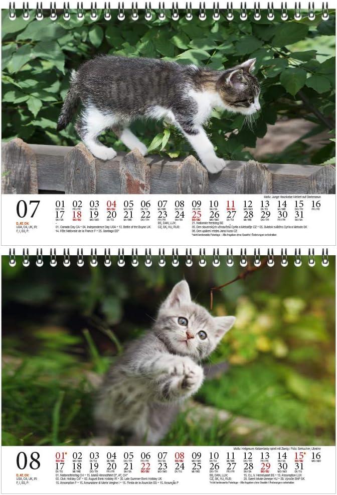 formato DIN A5 set regalo con 1 biglietto di auguri e 1 biglietto di Natale Calendario da tavolo per bambini di gatto magia di anima per 2021