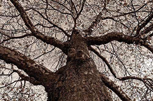 Photography Poster - Tree, Trunk, Gnarled, Bark, Branch, 24