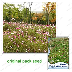 220 Seeds / Pack,Shade flower combination,flowers combination,Balcony potted plants seeds