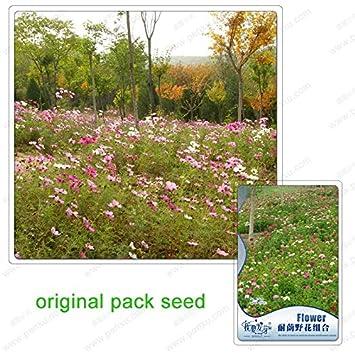 220 Samen Pack Shade Blume Kombination Blumen Kombination