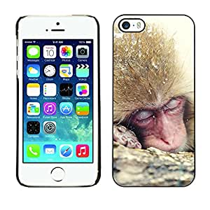 SHIMIN CAO- Dise?o Caso duro de la cubierta Shell protector FOR Apple iPhone 5 5S- Monkey Cute Animal