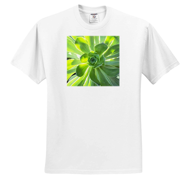 3dRose Danita Delimont Echeveria Plant ts/_314836 Natural Patterns - Adult T-Shirt XL
