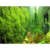 Moss wall Mesh Kit -(plant not included) Decorate Bare Tank Live Aquarium Aquatic Plant for Fish Tank