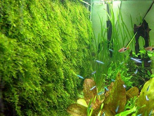 Moss wall Mesh Kit -(plant not included) Decorate Bare Tank Live Aquarium Aquatic Plant for Fish Tank