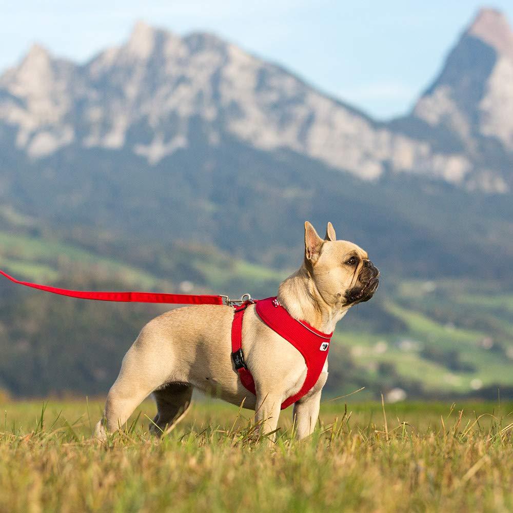CURLI Basic – arnés con pecho de felpa para perros – malla de aire ...