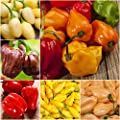 "Package of 50 Seeds, Habanero Pepper ""Rainbow Blend"" (Capsicum chinense) Non-GMO Seeds by Seed Needs"