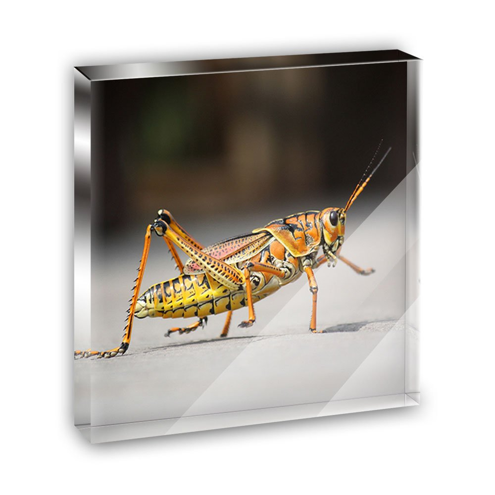 Grasshopper Caelifera Acrylic Office Mini Desk Plaque Ornament Paperweight