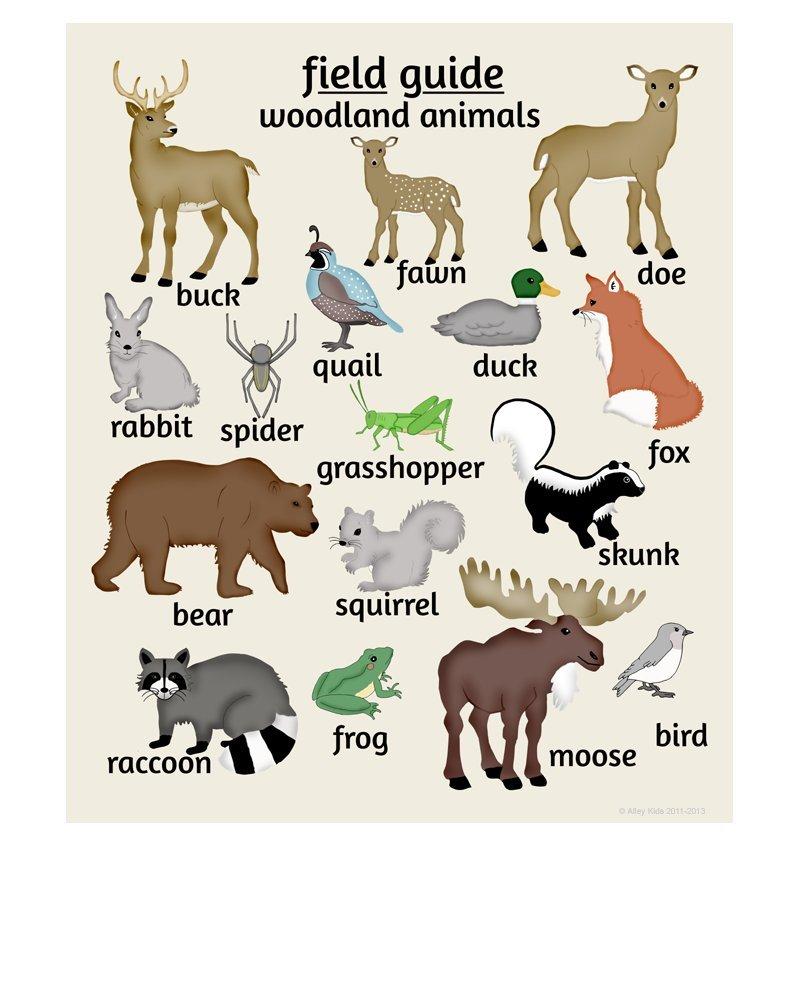 Amazon Com Alley Kids Woodland Animal Tracks Poster