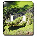 electric broome - Danita Delimont - Alligators - Australia, Broome. American alligator covered in green duckweed. - Light Switch Covers - double toggle switch (lsp_226191_2)
