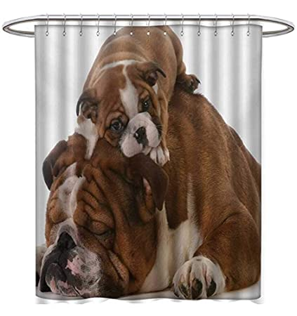 Starocle English Bulldog Shower Curtains Hooks Father Son Bulldogs Fathers Day Photograph Domestic Pet Animals