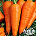 The Dirty Gardener Danvers Half Long Carrots, 1,000 Seeds