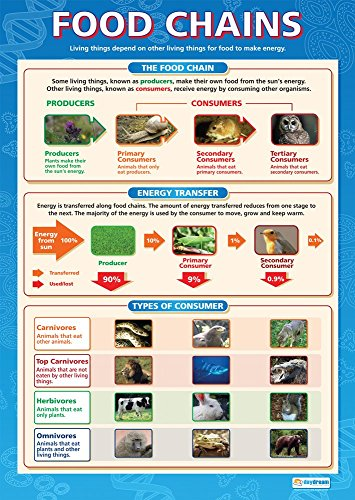 """Food Chain Chart - Food Chains   Science Classroom Posters   Gloss Paper measuring 33"""" x 23.5""""   Science School Posters for the Classroom   Educational Wall Charts, by Daydream Education"""