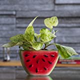 Ugaoo Watermelon Ceramic Planter (Multicolour)