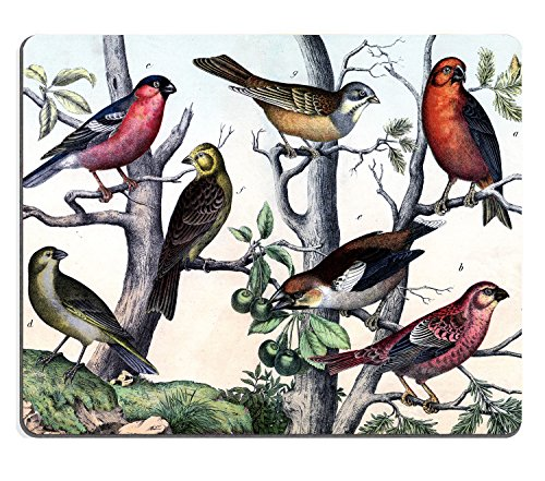 Price comparison product image Wknoon Mouse Pad,  Traditional Chinese Birds and Trees Painting,  Customized Rectangle Mousepad 9.45 X 7.87 Inch (240mmX200mmX3mm )