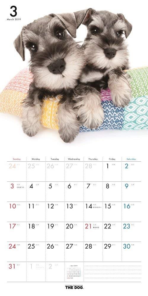The Dog Wall Calendar 2019 Miniature Schnauzer Office Product 2018