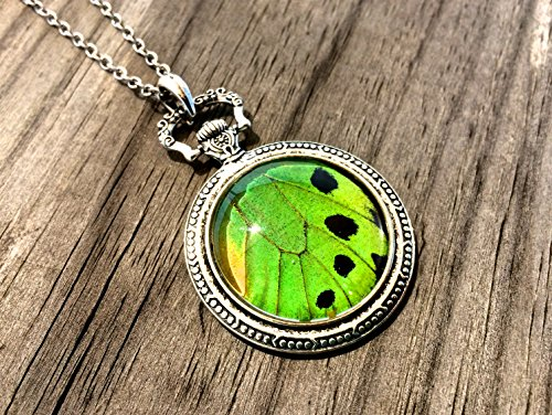 Real Green Birdwing Butterfly Wing Pocketwatch Style Pendant Necklace - Lime Green Pendant
