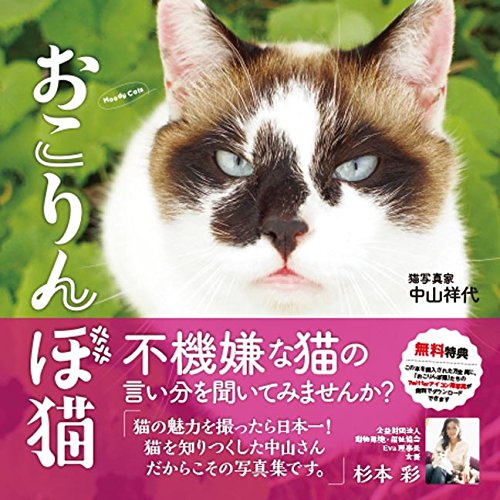 『おこりんぼ猫』
