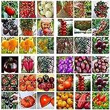 白鳥のトマト種子ミックス:パック100種子盆栽トマト種子ミニチェリーポット甘いフルーツ野菜有機フレッシュ
